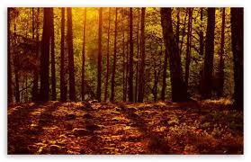 walking in the woods –poem