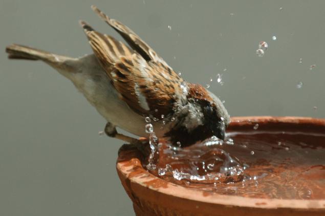 Dear Tiny Sparrow