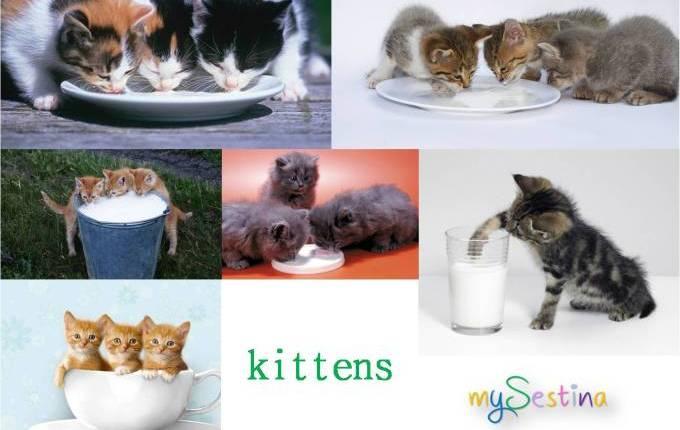 kittens..